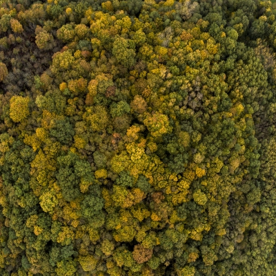 Aerial photo of a Forest in autumn, Gironde, France